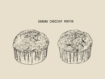 Banana Chocolate chip muffins , sketch vector. Royalty Free Stock Photography