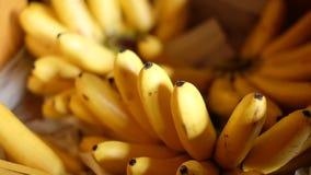 Banana. Close up Pisang mas banana Asian fruit Stock Photos