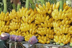Banana clusters. Banana branches and banana flowers. Can be used as banana background stock photos