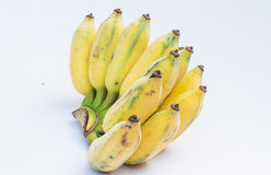 Banana coltivata Fotografia Stock Libera da Diritti