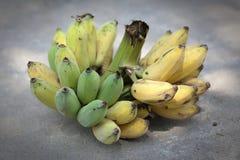 Banana coltivata Fotografia Stock