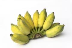 Banana coltivata Immagine Stock Libera da Diritti