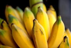Banana coltivata nel tThailand Fotografie Stock