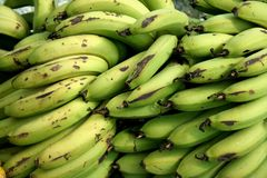 Banana Crop. Frontal view of pile of unripe, green banana crop Royalty Free Stock Photos
