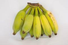 Banana cultivada Imagens de Stock