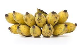 Banana cultivada Fotografia de Stock Royalty Free