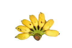 Banana cultivada Foto de Stock