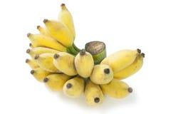 Banana. Cultivated banana isolated on white Stock Photos