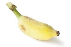 Banana. Cultivated banana isolated on white Royalty Free Stock Photos