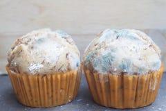 Banana cupcake with mold fungus Royalty Free Stock Images