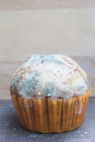 Banana cupcake with mold fungus Royalty Free Stock Photos