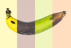 Banana Royalty Free Stock Image