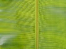 Banana da folha do teste padrão Imagens de Stock