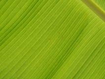 Banana da folha do teste padrão Fotos de Stock Royalty Free