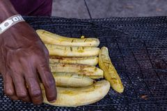Banana-da-terra grelhado ?tronco ?no centro da conserva??o de Lekki fotografia de stock royalty free