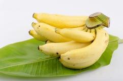 Banana de Cavendish (nome tailandês da tanga de Musa (grupo) Kluai Hom do AAA. Imagem de Stock