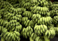 Banana di Cavendish Immagine Stock