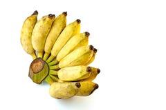 Banana di Pisang Awak su fondo bianco Fotografia Stock Libera da Diritti