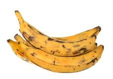 Banana do banana-da-terra Fotografia de Stock Royalty Free