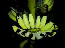 Banana do bebê Fotografia de Stock Royalty Free