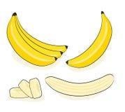 Banana do vetor Grupos dos frutos frescos da banana isolados no branco ilustração royalty free