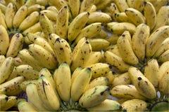 Banana dorata Fotografia Stock Libera da Diritti