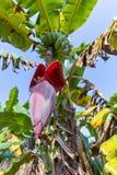 Banana e a flor fotografia de stock