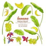 Banana elements set Stock Photo