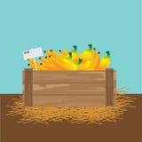Banana em uma caixa de madeira Fotos de Stock Royalty Free