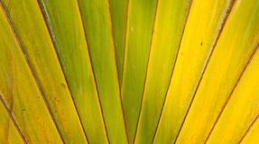 Banana Fan pattern Royalty Free Stock Images