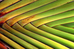 Banana fan Stock Photography