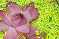 Banana Flower. Floating in water. This is a traditional decorative setup used in India Royalty Free Stock Photography