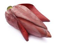 Free Banana Flower Royalty Free Stock Image - 19935826