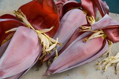 Free Banana Flower Stock Photos - 65489693