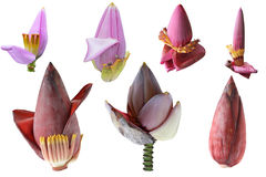Banana Flower Set Stock Image