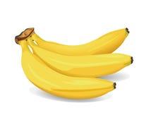 Banana Fruit. Realistic vector illustration of a bunch of bananas Stock Photo