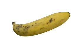 Banana fruit fresh ripe yellow skin healthy concept Royalty Free Stock Photo