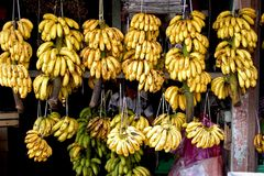 Banana fruit seller Royalty Free Stock Photo