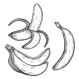 Banana fruit set. Banana fruit. Organic nutrition healthy food. Isolated on white background. Engraved hand drawn vintage retro vector lucuma illustration Stock Photos