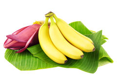 Banana fruits with blossom. Fresh banana fruits with a banana blossom on banana leaves Stock Photos
