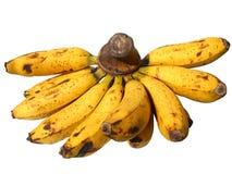 Banana Fuit Imagens de Stock