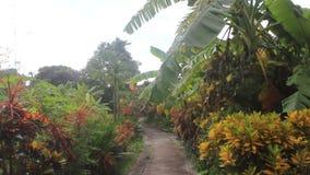 Banana garden path stock video footage