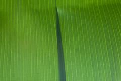 Banana green leaves overlap. Abstract of nature one part banana green leaves overlap on center for background Royalty Free Stock Photography