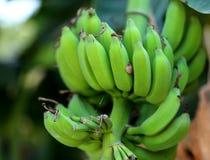 Banana grezza Fotografia Stock Libera da Diritti