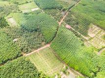 Banana i durian drzew sad i gumowych drzew plantacja Zdjęcie Royalty Free