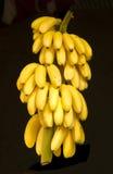 Banana isolated on black background Stock Photos