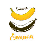 Banana isolated vector. Banana fruit silhouette and color. Cartoon banana vector icon, stickers, print or logo.  Royalty Free Stock Image
