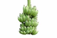 Banana isolated on white background. Bunch of green bananas on white background Royalty Free Stock Photo