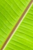 banana leaf Royalty Free Stock Image