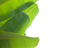 Banana leaf. Green used background Royalty Free Stock Photo